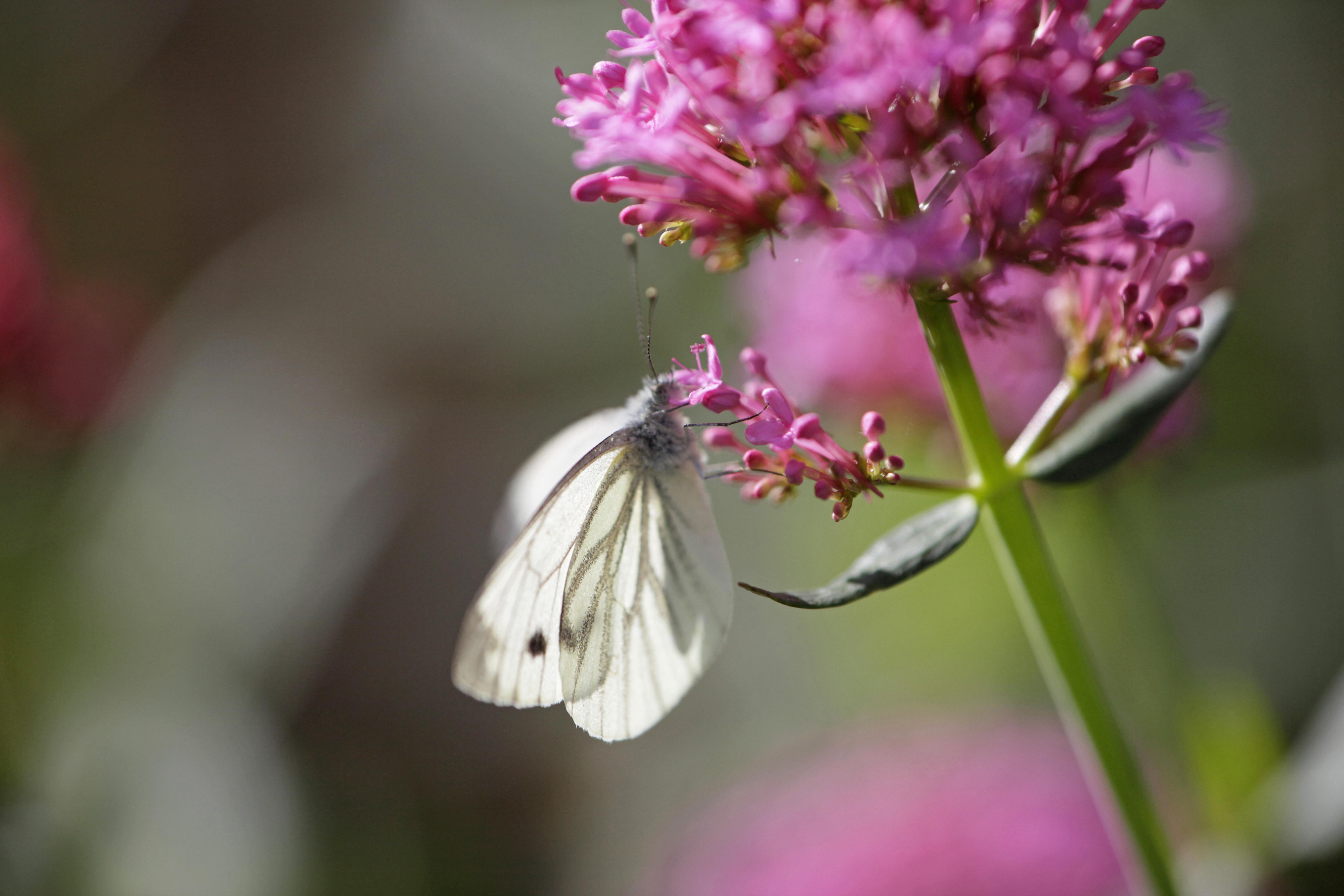 creating a wildlife friendly garden the rspb