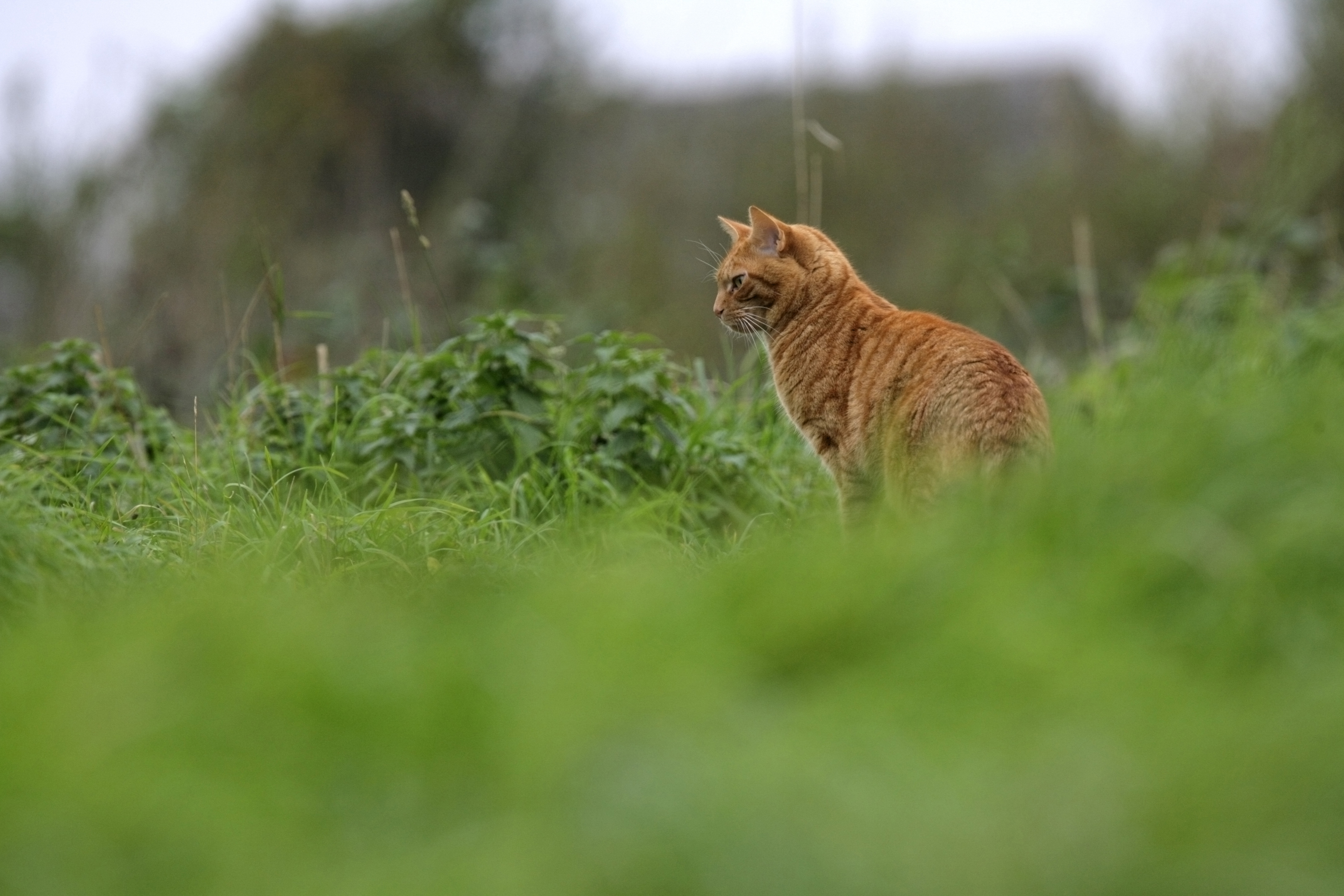 How to Stop Cats Catching & Killing Birds | Cat Owners